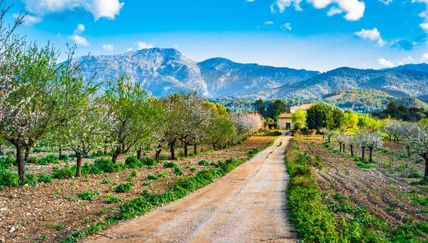 Schönes Panorama mit Mandelblüte auf Mallorca