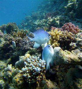 Korallen - Tauchen in Hurghada