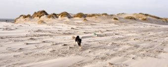 Nordsee mit Hund
