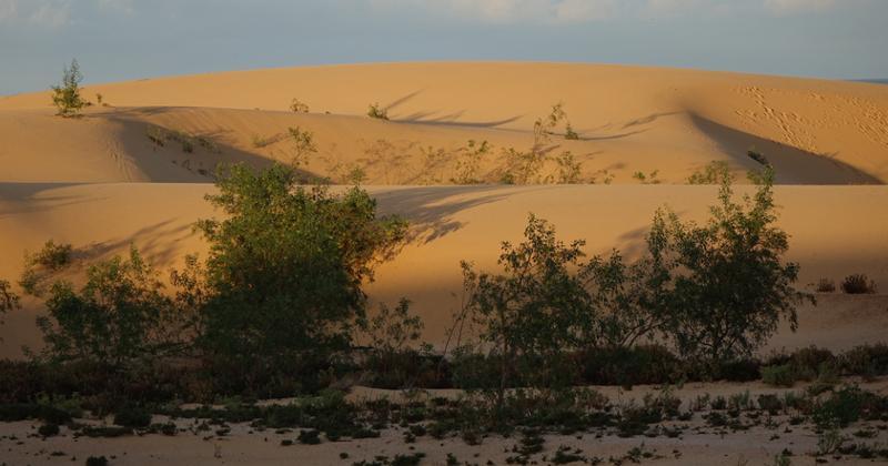 Natural Park Corralejo