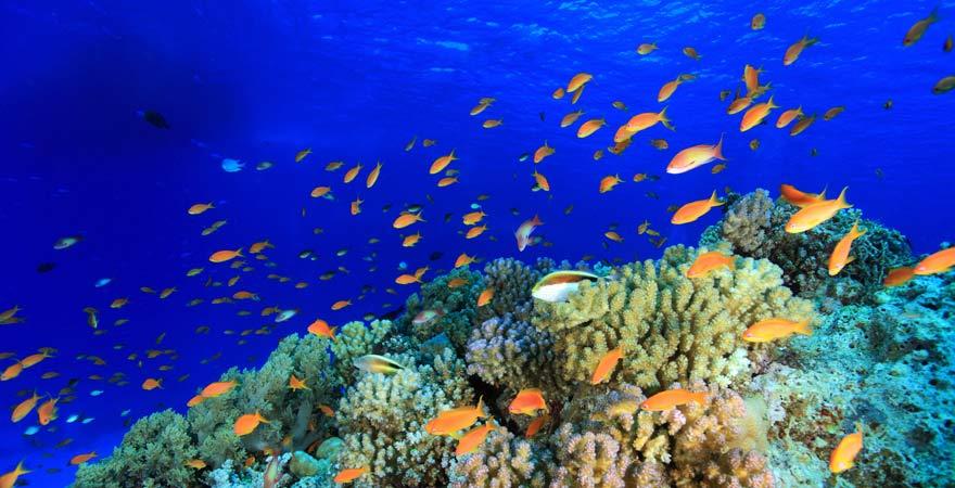 Die Bunte Unterwasserwelt des Roten Meeres in Ägypten