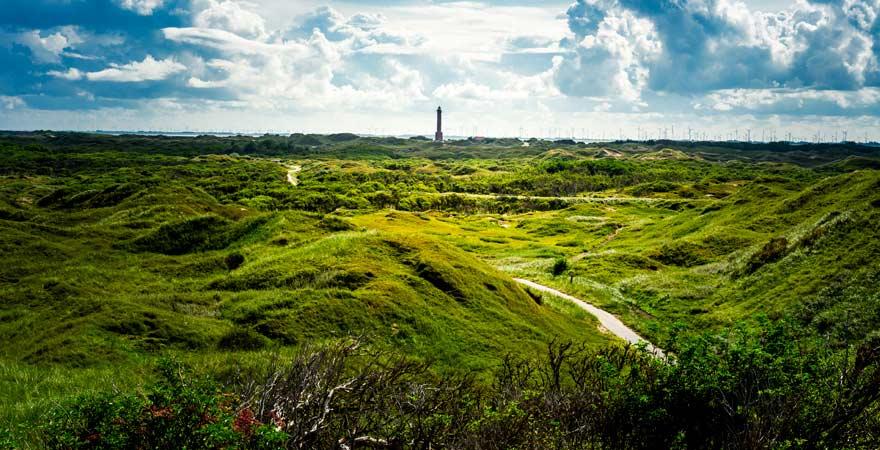 Moorlandschaft auf Norderney