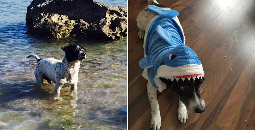 Antonijas Hund Jack, Malta