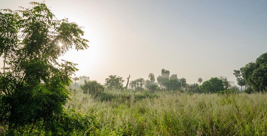 Dschungellandschaft in Gambia