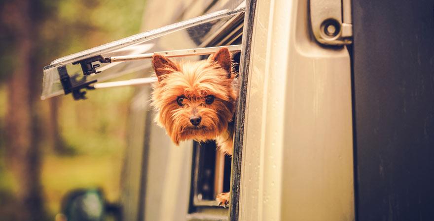 Hund im Wohnwagen beim Campingurlaub