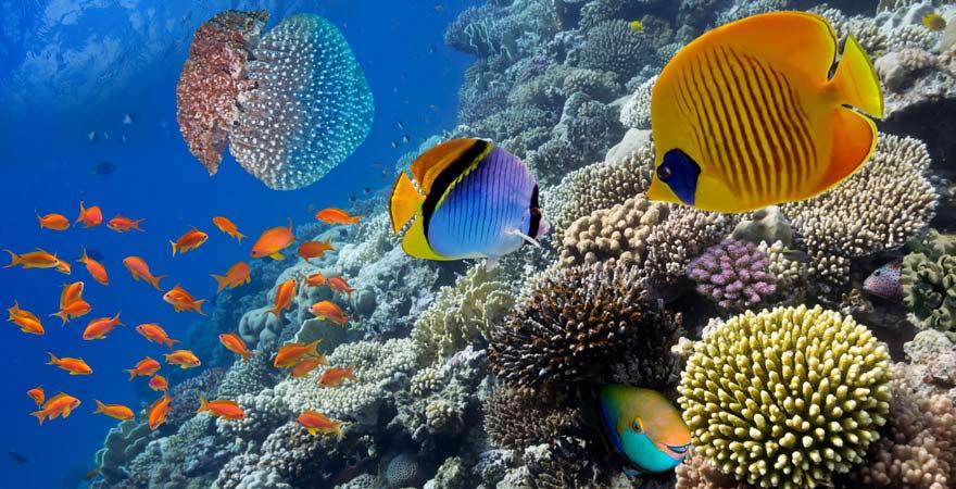 Unser Reisetipp: die bunte Unterwasserwalt vor den Malediven