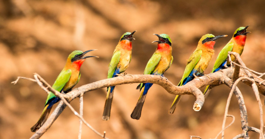 Vögel in Gambia