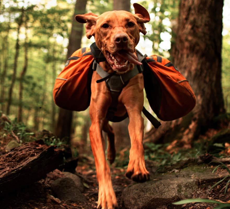 Wandern mit Hund im Campingurlaub