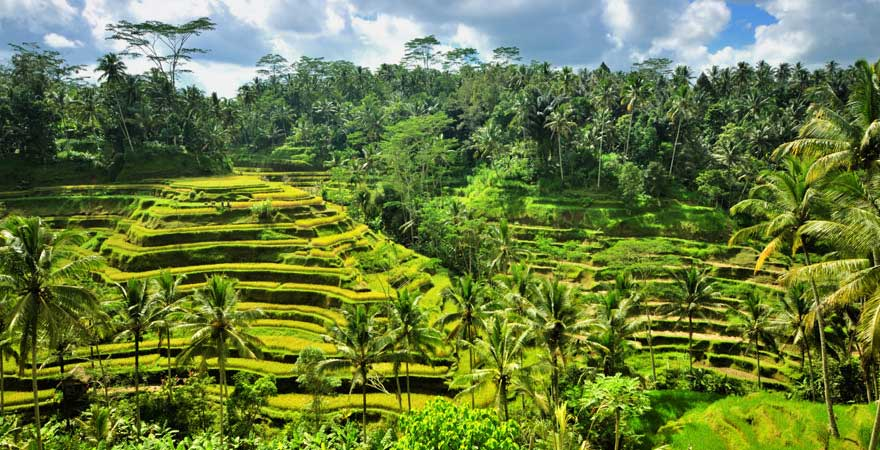 Reisterrassen, Ubud, Bali