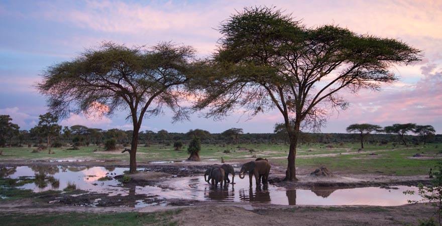 Elefanten auf Safari in Simbabwe