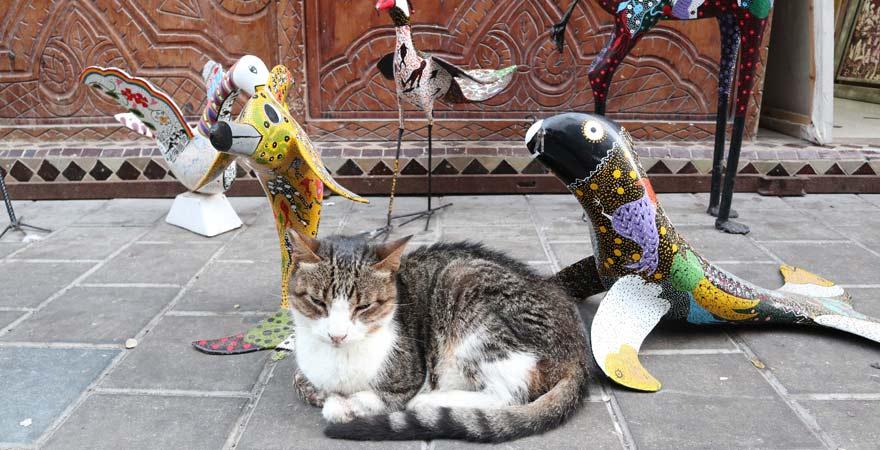 Katze in Essaouira, Morokko