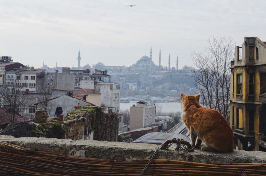 Panorama von Istanbul mit Katze im Vordergrund