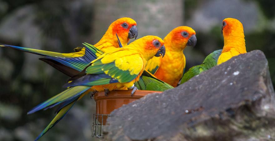 Papageien im Loro Parque auf Teneriffa