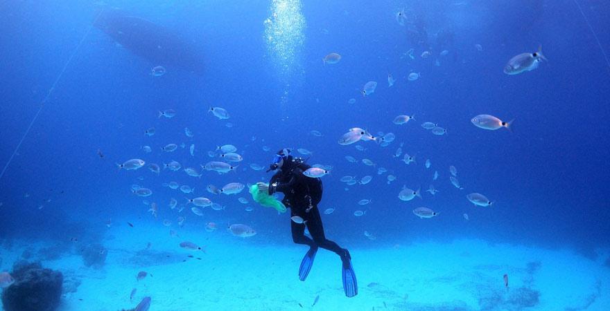 Diese Unterwasserwelt erwartet euch beim Tauchen auf Gozo, Malta