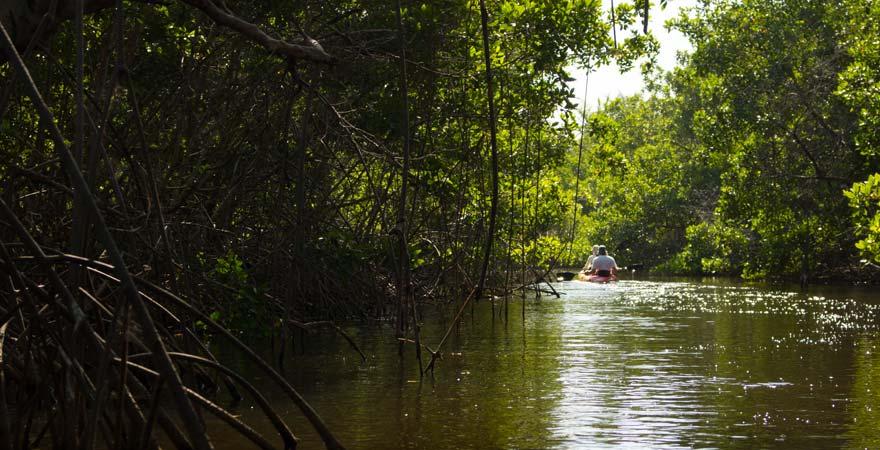 Eine Kayaktour auf dem Gambia River zählt zu den Highlight-Ausflügen