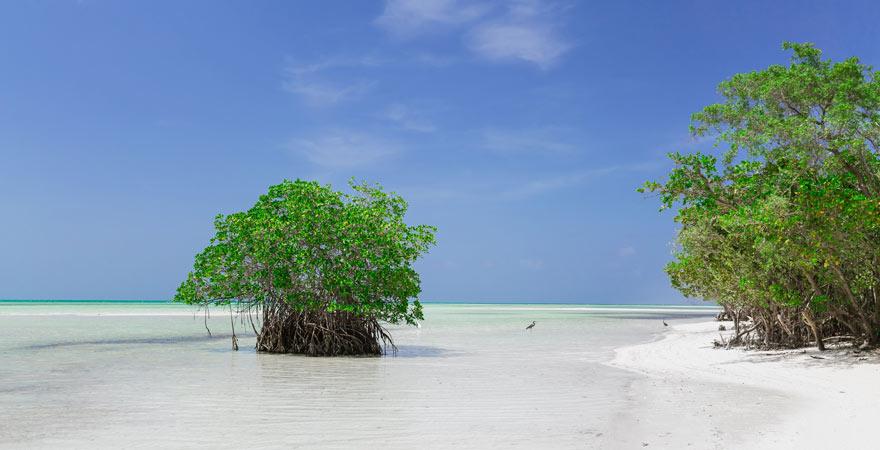 Die Playa Cayo Coco ist einer der Top-Strände auf Kube