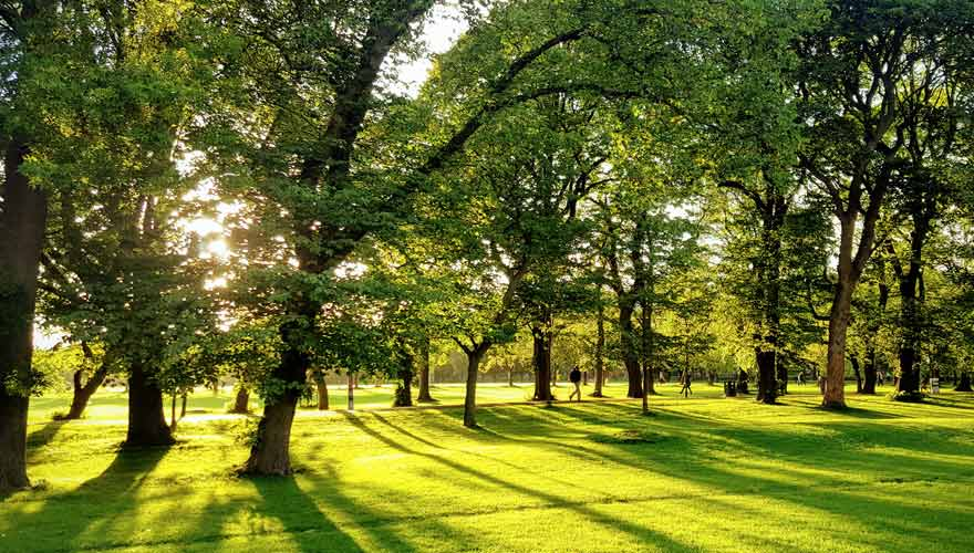 Eure Wanderung endet im Park The Meadows in Edinburgh
