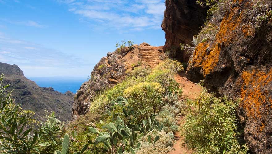 Ein Wanderweg von Punta del Hidalgo auf Teneriffa