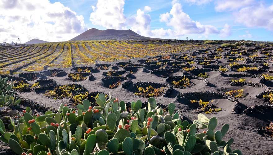 Das Weinanbaugebiet La Geria ist eine Sehenswürdigkeit auf Lanzarote