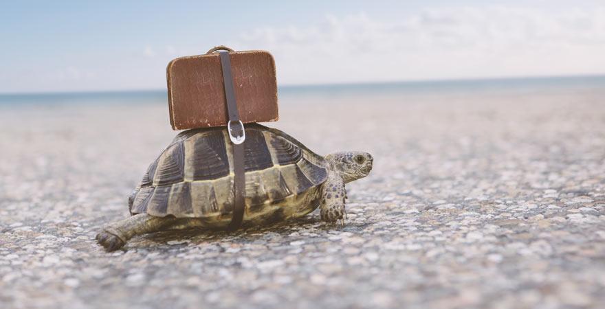 Schildkröte mit Koffer