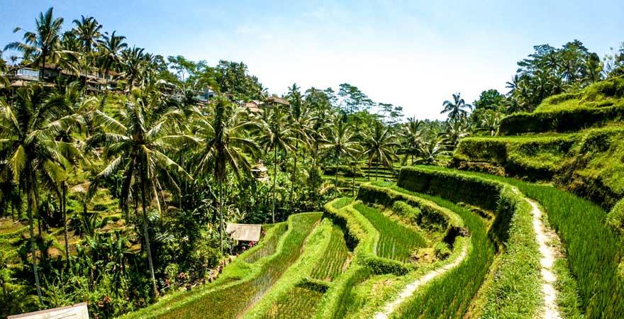 Die Tegalalang-Reisterrassen sind eine beliebte Sehenswürdigkeit auf Bali bei Instagramern