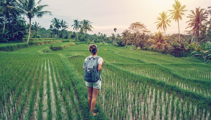 Reisterrassen bei Ubud in Bali