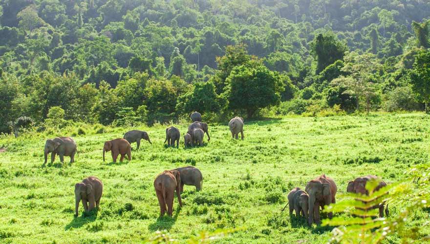 Elefanten im Kui Buri Nationalpark in Thailand