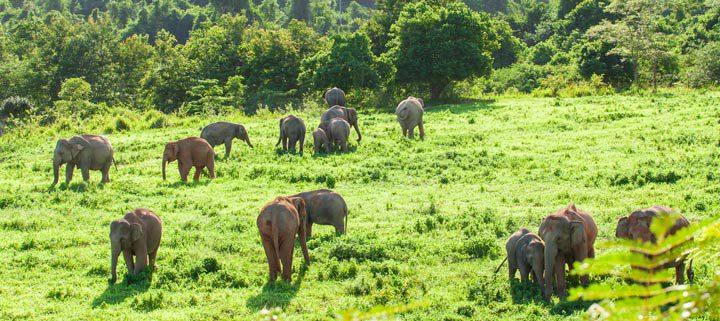 Nationalparks in Thailand