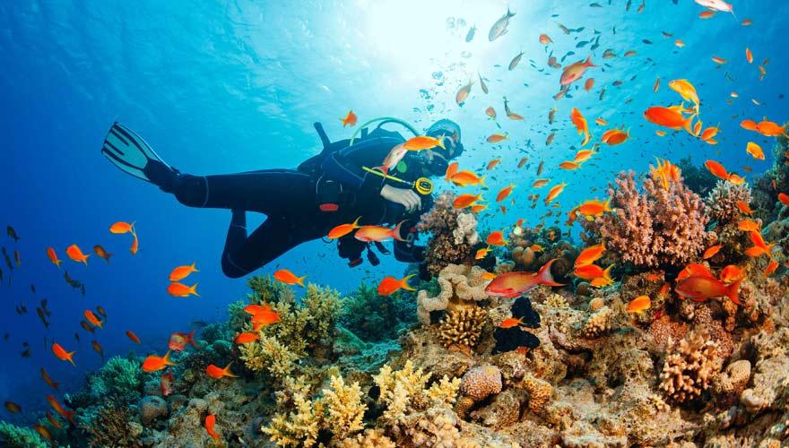 Tauchen im Roten Meer in Ägypten