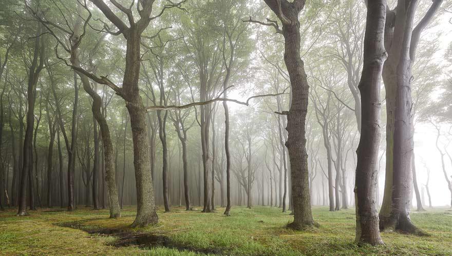 Der Gespensterwald Nienhagen verwandelt sich bei Nebel in einen gruseligen Ort