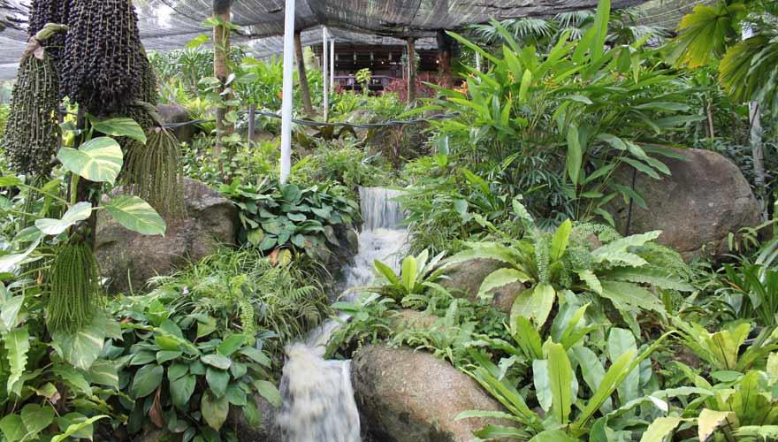 Der Samui Butterfly Garden ist eine schöne Sehenswürdigkeit auf Koh Samui