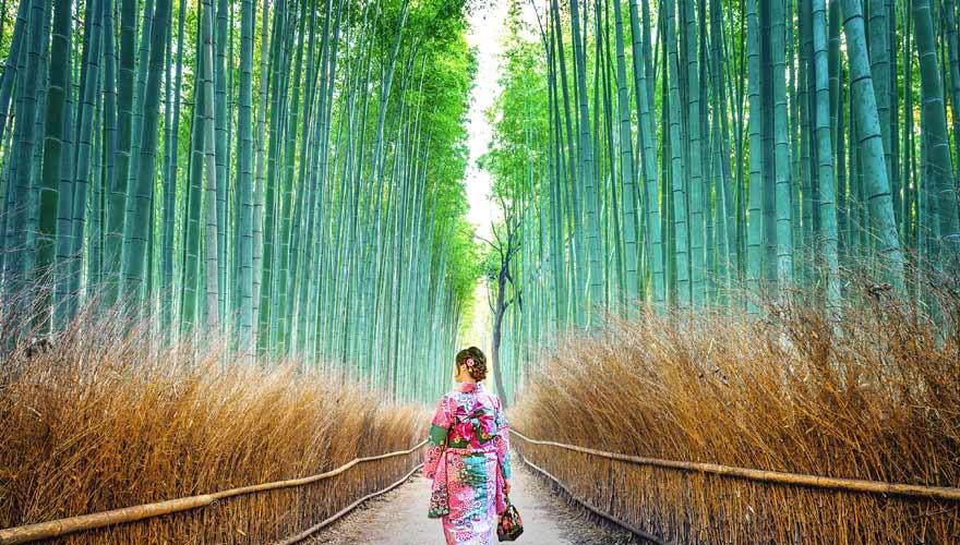 Der Arashiyama Bambuswald - eine tolle Kulisse für Fotos