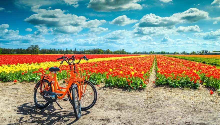 Fahrradtour zur Tulpenblüte in Holland