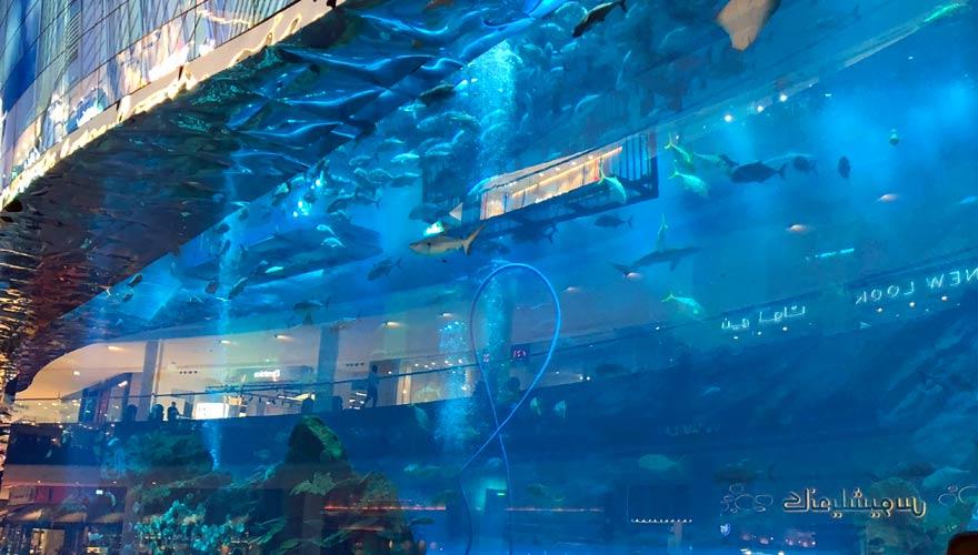 Aquarium in der Dubai Mal