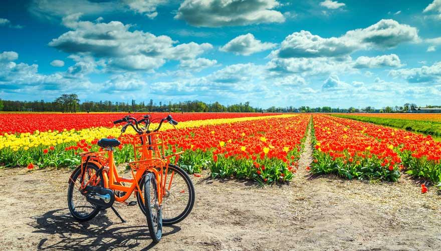 Ein Fahrrad und ein Tulpenfeld: die typisch holländische Landschaft