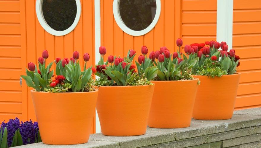 Die Farbe Orange findet man überall in den Niederlanden wie hier im Keukenhof