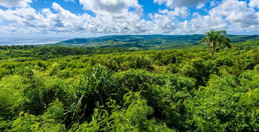 Farley Hill Nationalpark auf Barbados