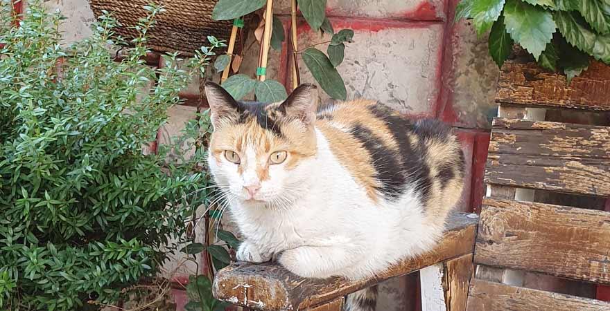 Katze in Tel Aviv