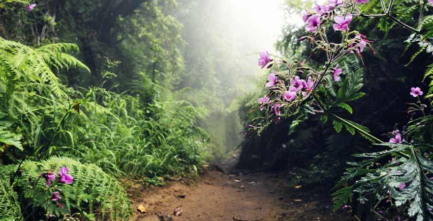 Levada do Caldeirão Verde auf Madeira