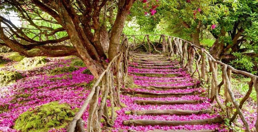 rosa blüten bedecken einen pfad im botansichen Garten von Funchal, madeira