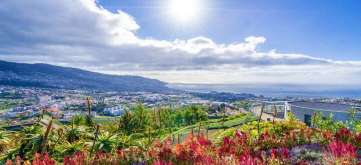 Blumen vor dem Panorama von Funchal auf Madeira