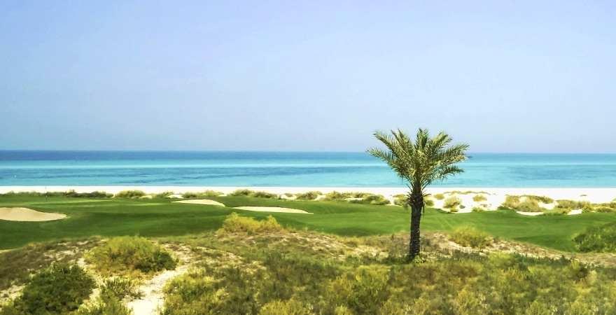 Eine Palme am menschenleeren Strand von Saadiyat Island in Abu Dhabi