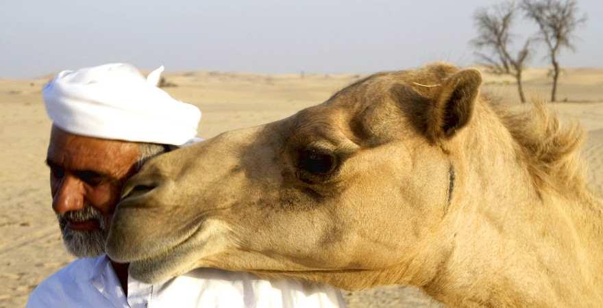 Ein kamel legt seinen Kopf auf die Schulter eines Mannes