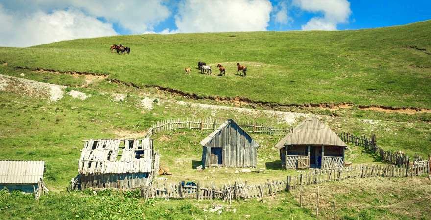 Pferde auf einer Alm in Montenegro