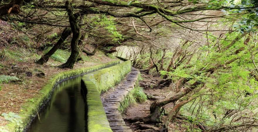 Der Lorbeerwald und ein Levada Wasserkanal auf der Insel Madeira Portugal