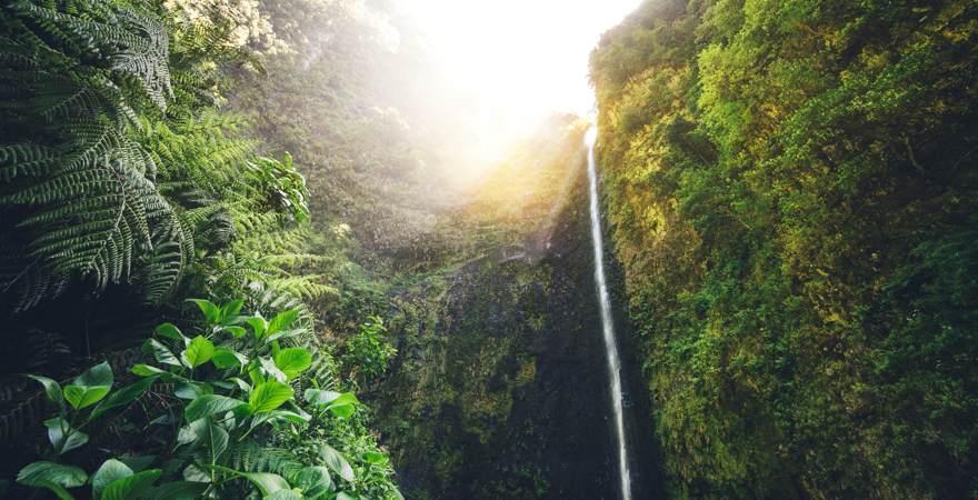 Der Wasserfall Risco auf Madeira zwischen grünen Klippen