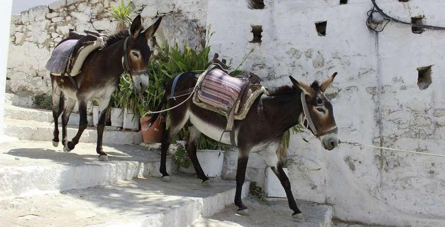 Esel in Lindos