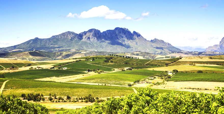 Blick ueber en weites Tal mit Weinbergen mit dem Tafelberg im Hintergrund