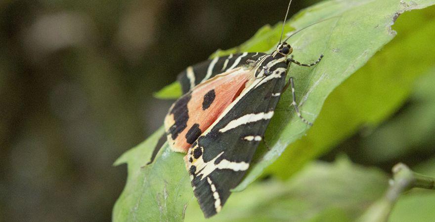 Tal der Schmetterlinge auf Rhodos