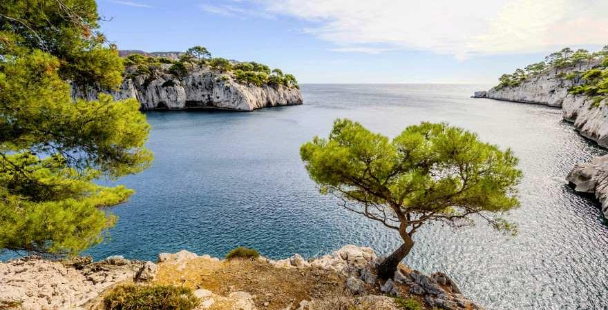 Eine Kiefer auf einem Felsen in einer malerischen Bucht